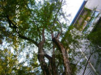Photo_20190805134101