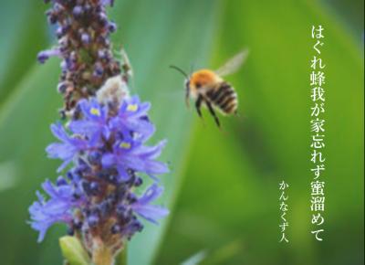Photo_20200410125501