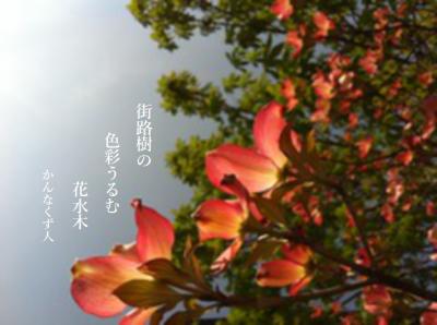Photo_20200413134701