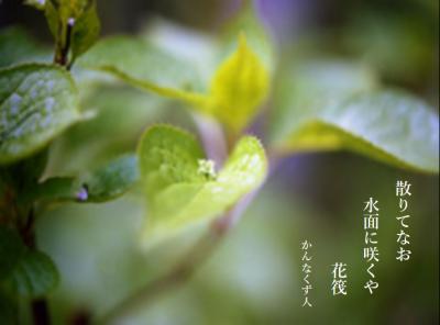 Photo_20200518112601