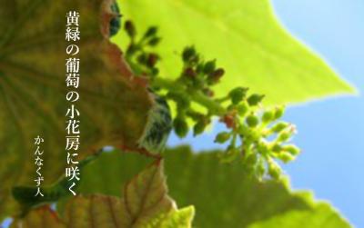 Photo_20200609141701