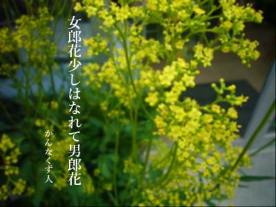 Photo_20200925083501