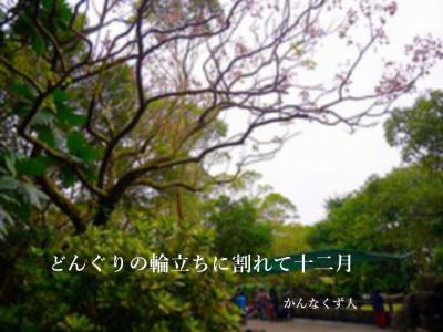 Photo_20201127113102